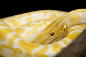 snake-1137456_960_720
